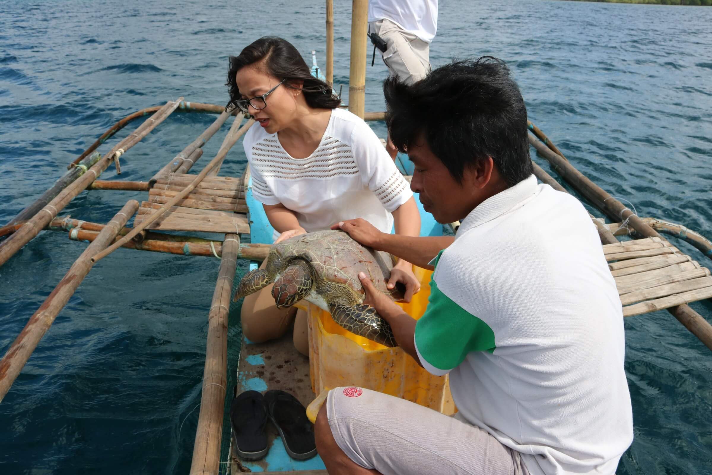 Sending Back the Sea Turtle to its own Habitat