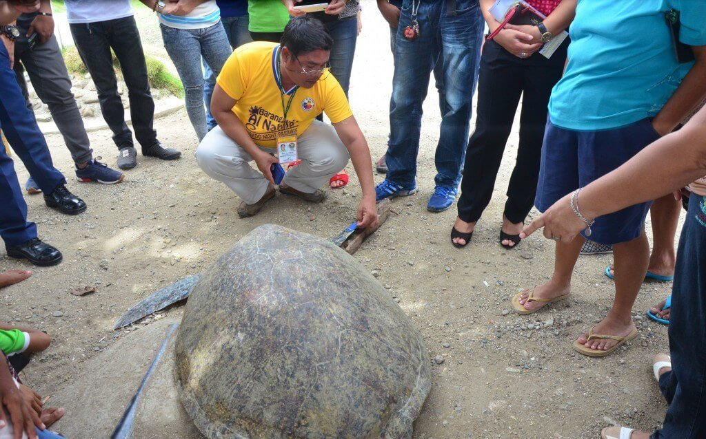 SENDING BACK THE SEA TURTLE TO ITS OWN ABODE