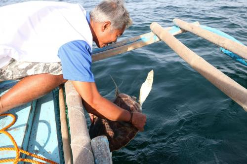Sending Back the Sea Turtle to its own Habitat-2