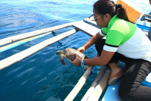 Sending Back the Sea Turtle to its own Habitat - July 26, 2019